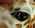 I see food