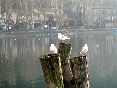 warming seagulls