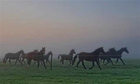 Misty morning land run horses DSC_8885_DxO