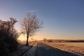 frozen morning2