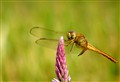 Dragonfly on a wild flower