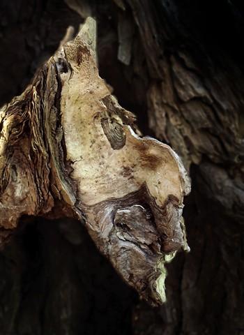 Woodand Monster