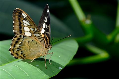 Butterfly_07