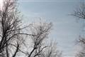 Falling Frost