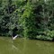 small heron 2