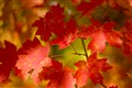 Fall Colors. SMC Pentax-M 1:1.7 50mm