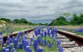 Tracks and wildflowers