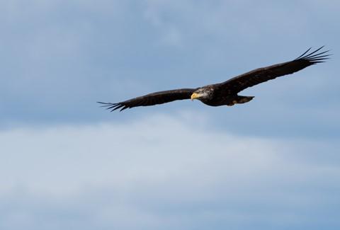 baby eagle-1