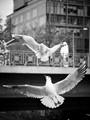 Stadt park birds