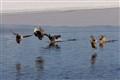 Landing Ducks