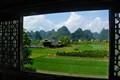Landscape outside the window