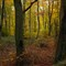 Autumn-in-Cranham-Woods