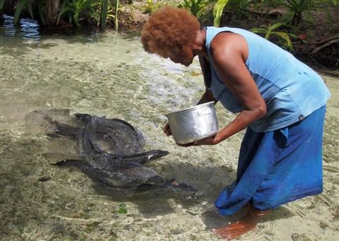 13-02-03 P1286941 Eeel feeding