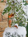 Jerusalem Snow.