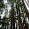 Alaskan Woods