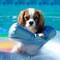 Louie on Floatie
