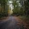 Road to Pine Hill: Voigtländer Ultron 35mm f/1.7 (LTM)