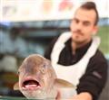 smells fishy!