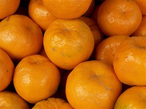 purnia mandarins