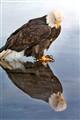 eagle0506