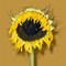 Sunflower with shadow