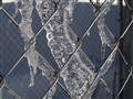 Ice on a Chainlink Fence