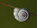 Sleeping Snail