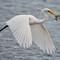 2014 egrets-1925