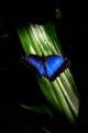 butterfly web