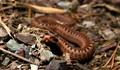 4 inch Viper