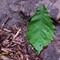 Leaf On A Rock Bed