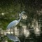 Processed_-08325: Great white heron, Forest Park, St. Louis MO