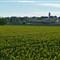 Farmland025