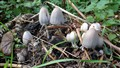 Not mushroom here!