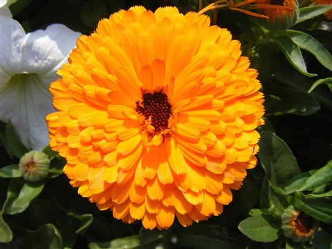 Kolkata Flower Show