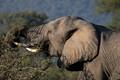RSA - Kruger National Park