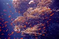 Nature's underwater music