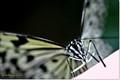 butterfly-macro
