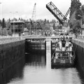 Tug In Ballard Locks