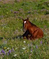 Summer Meadow Horse