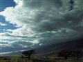 Maui Big Sky