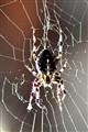 The spider in the garage
