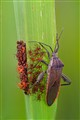 Mama bug and baby bugs