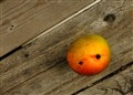 Mango on Deck