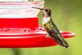 Mr. Hummingbird