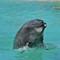 Seaworld - Dolphin 1