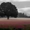 Adair D Red Clover Dawn-1082