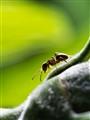 ant profile