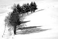 Schadow an the snow