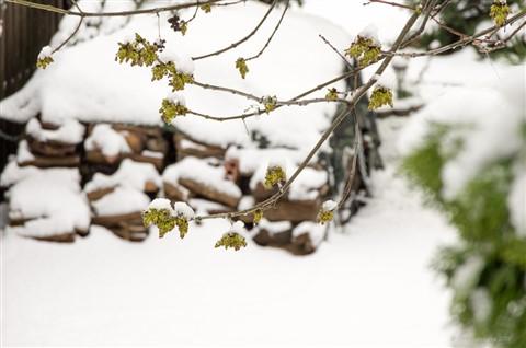 May Snow-3
